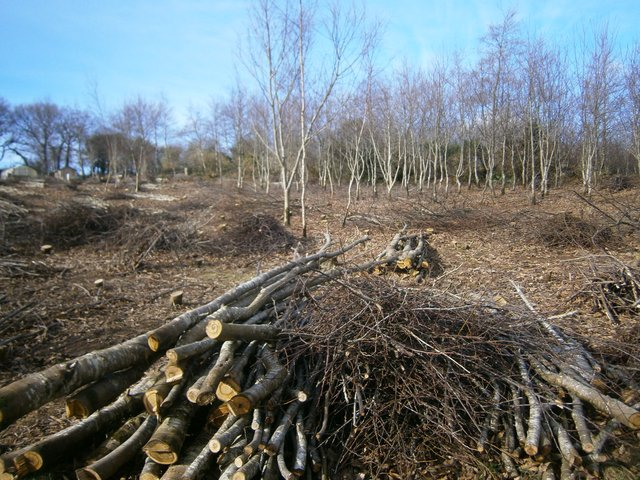 Chestnut Coppice at Pentiddy