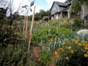The vegetable garden, Pentiddy Woods